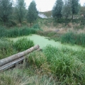Large amounts of Duckweed on this water in the Olympic Park must be pollution getting in somewhere