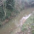 turkey-brook-froth-pollution