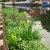 A new reedbed in your community – your vote counts!