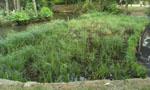 Grovelands Park reedbed