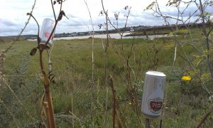 cans-on-twigs