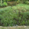 New reed bed helping to improve water quality on the Salmons Brook