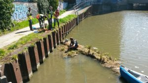 volunteers working on a floating reedbed close to a towpath