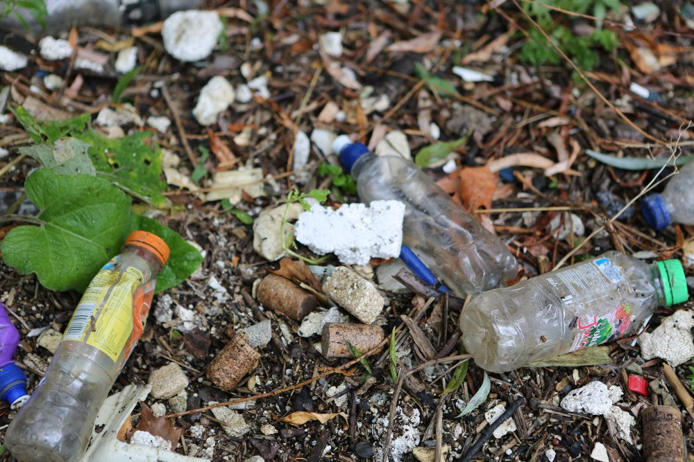 Plastic bottles at the side of the Tames near Fulham