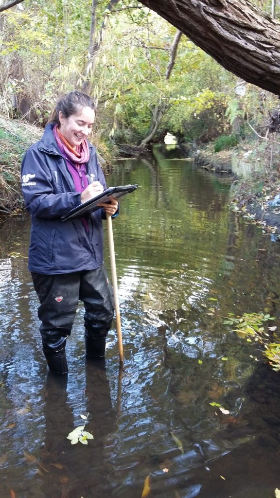 Monitoring river quality on the Salmons Brook, Enfield