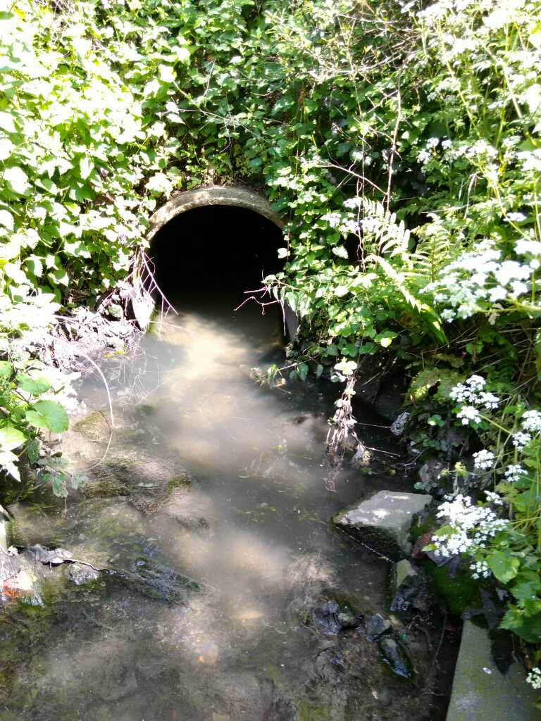 A typical pollution outfall/ZSL